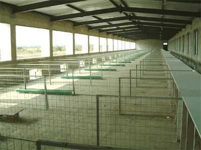 水禽室内采食区及产蛋箱