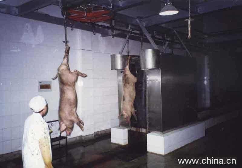 立式双排洗猪机