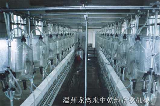 鱼骨式挤奶机