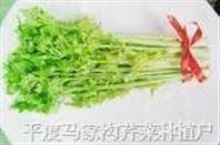 马家沟大叶黄芹菜