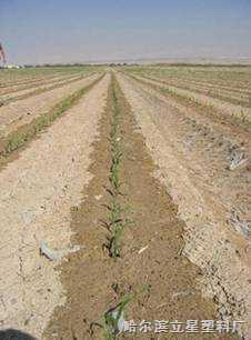 壓力補償式滴灌帶,內瓖扁平式滴灌帶,土下滴灌帶