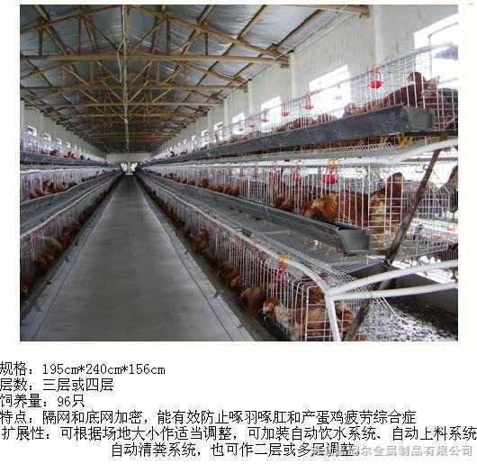 鸡笼,蛋鸡笼,河北安平养殖笼具,鸽笼,兔笼