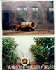 3MZ系列果园弥雾机喷雾器