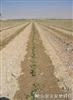 压力补偿式滴灌带,内镶扁平式滴灌带,土下滴灌带